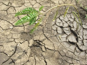 Plants and crops  are struggling to grow in arid conditions